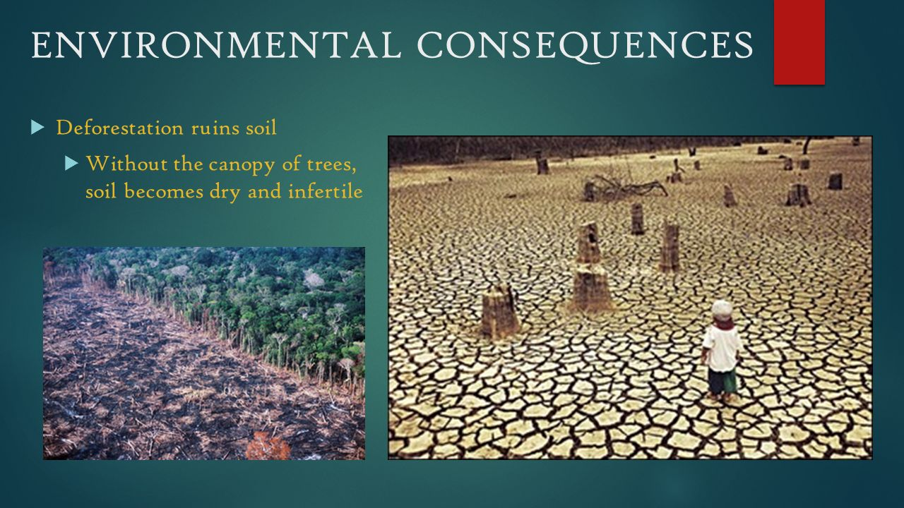 deforestation effects and consequences Deforestation can have effects on the earth's climatic conditions too all types of creatures on earth will start feeling the consequences it is helpful if people are informed about the effects of deforestation and how to solve it.