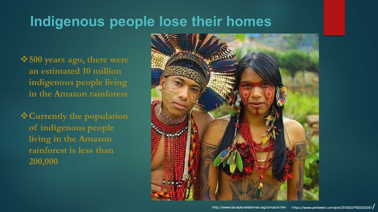 Rainforest Deforestation Ppt Video Online Download
