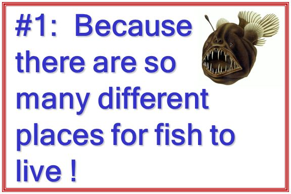 Fish evolution part ppt download for Good place to fish near me