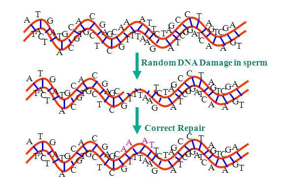 DNA, RNA and protein the Central Dogma - Science Explained