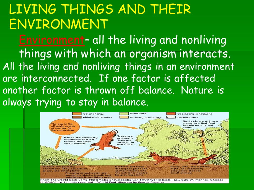 an overview of living organisms and their surroundings The living organism and their surrounding - free download as powerpoint  presentation (ppt / pptx), pdf file (pdf), text  introduction to oracle patches.