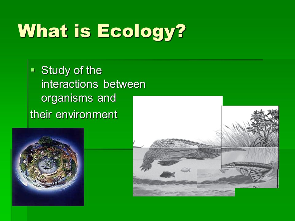 ecosystems to study the interactions between The study of ecosystems includes the interaction of organisms with each other and with the physical environment consistent interactions occur within and between species in various ecosystems as organisms obtain resources, change the environment, and are affected by the environment.