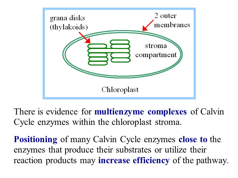 Photosynthesis: Calvin Cycle - ppt video online download