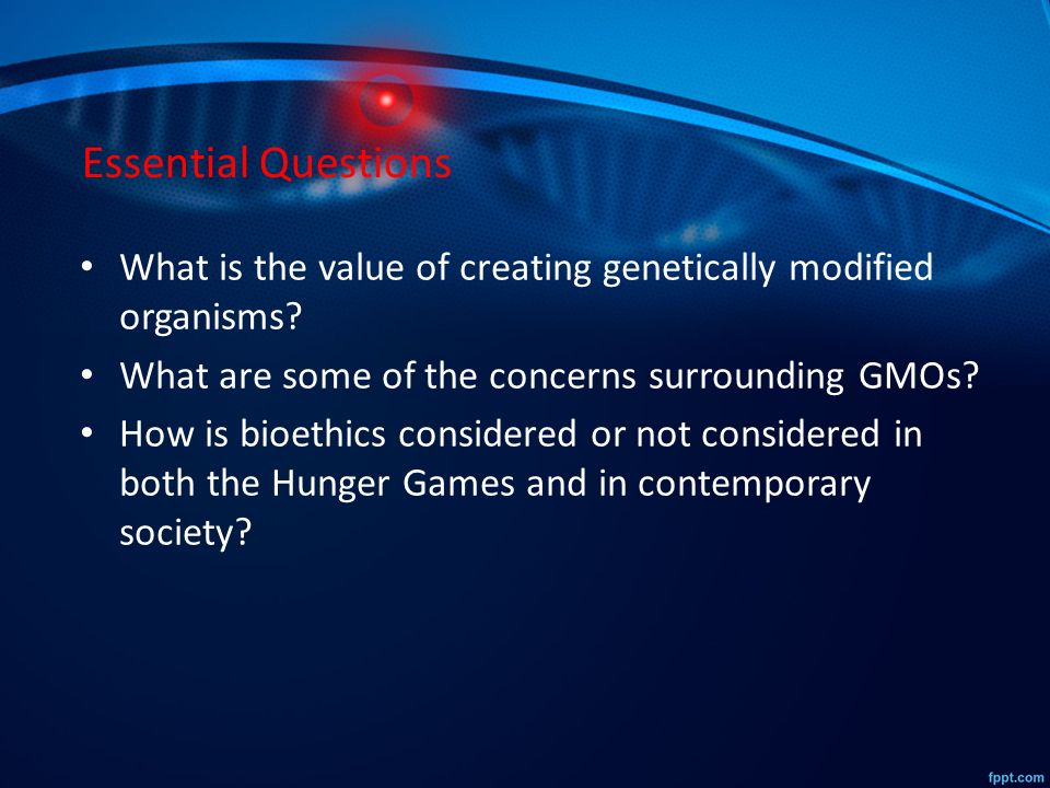 argument essay about gmo
