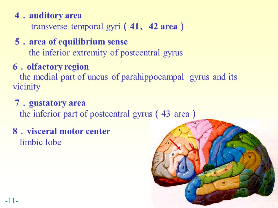 chapter 17 central nervous system - ppt video online download, Human Body