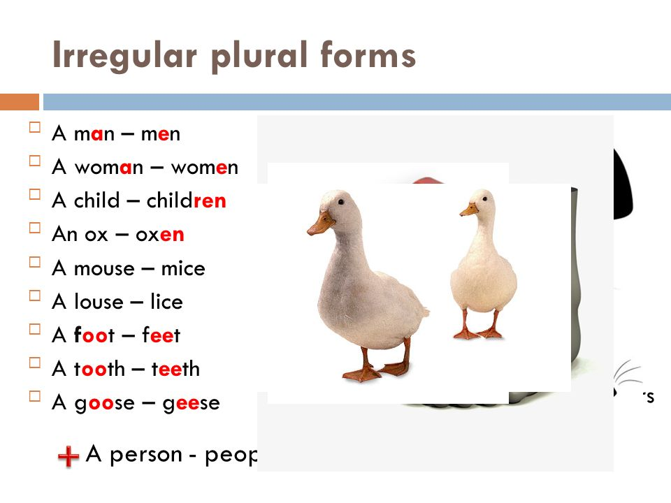 Singular And Plural Flower S Bus Es Ppt Video Online
