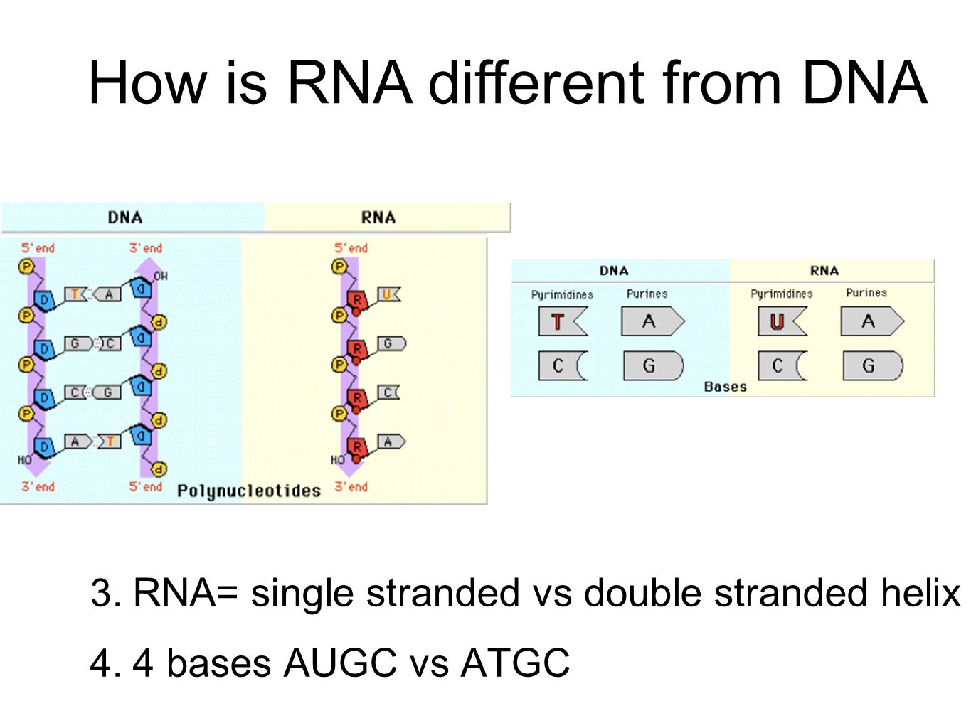 different forms of dna pdf