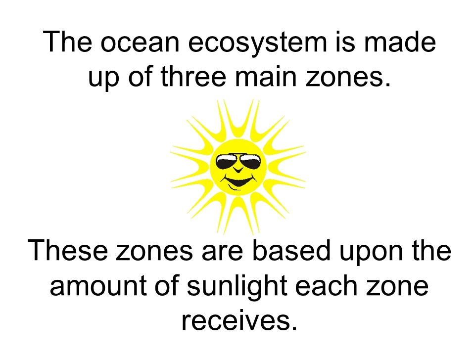 The ocean ecosystem is made up of three main zones