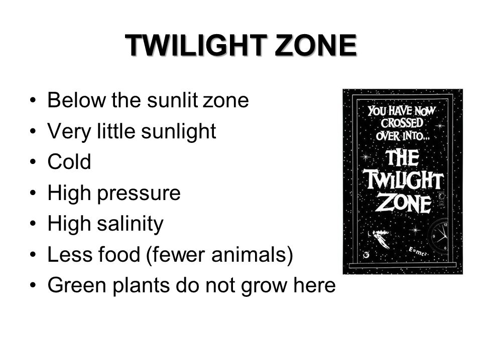 TWILIGHT ZONE Below the sunlit zone Very little sunlight Cold