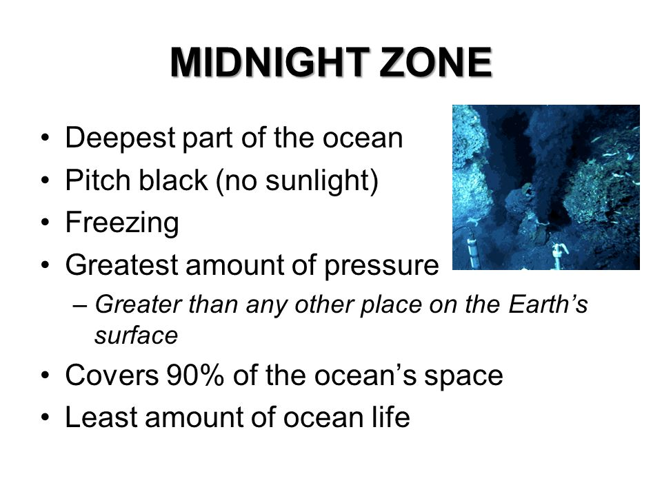 MIDNIGHT ZONE Deepest part of the ocean Pitch black (no sunlight)