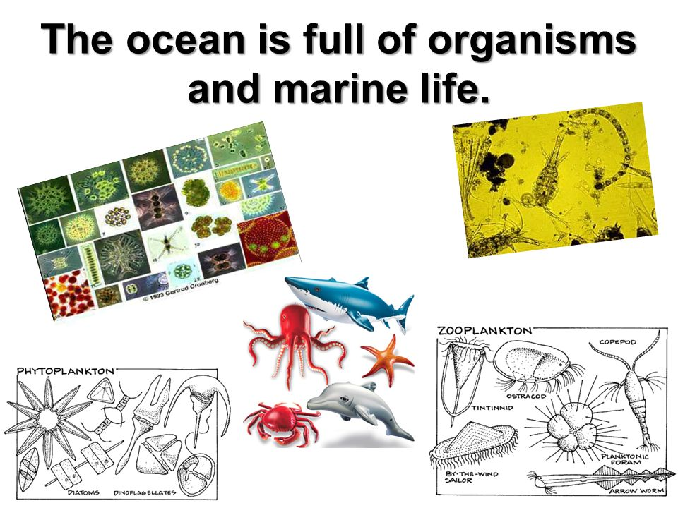 The ocean is full of organisms and marine life.