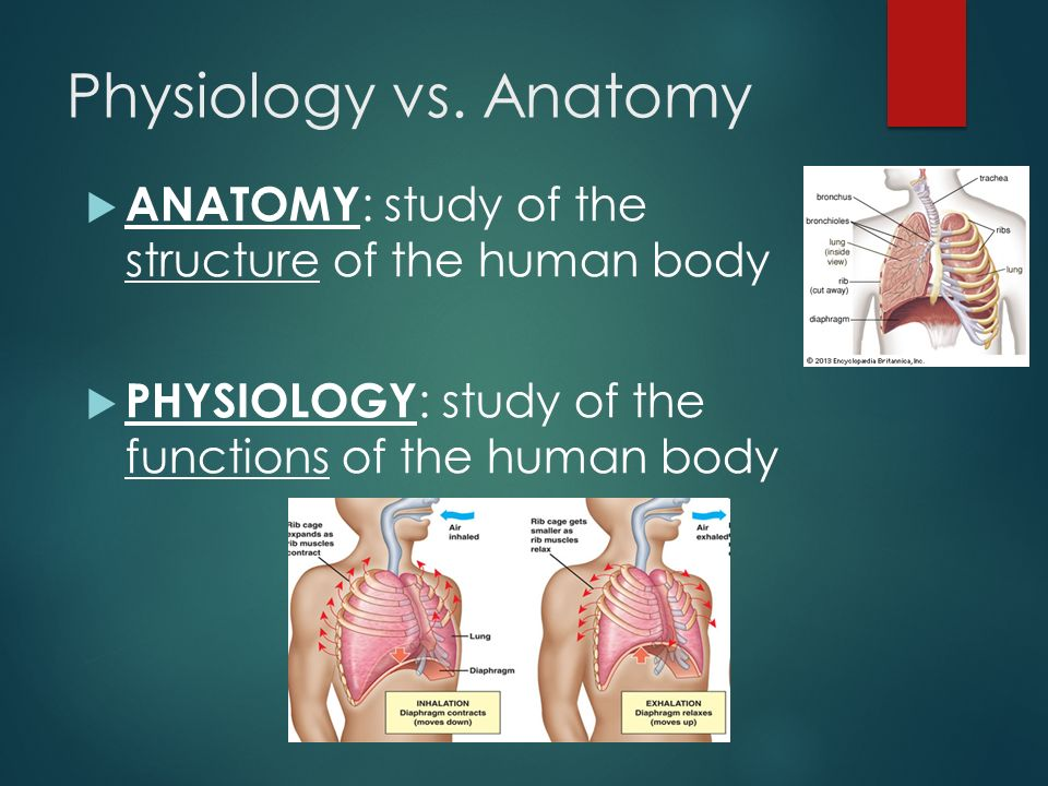 Anatomy and psysiology