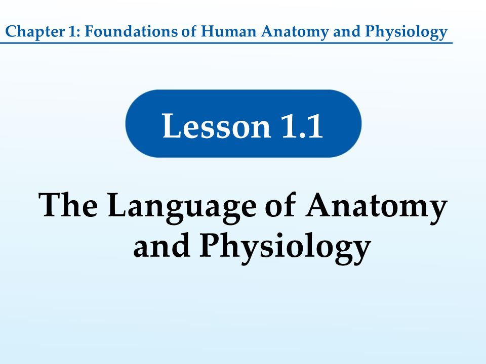 The Language of Anatomy and Physiology - ppt video online download