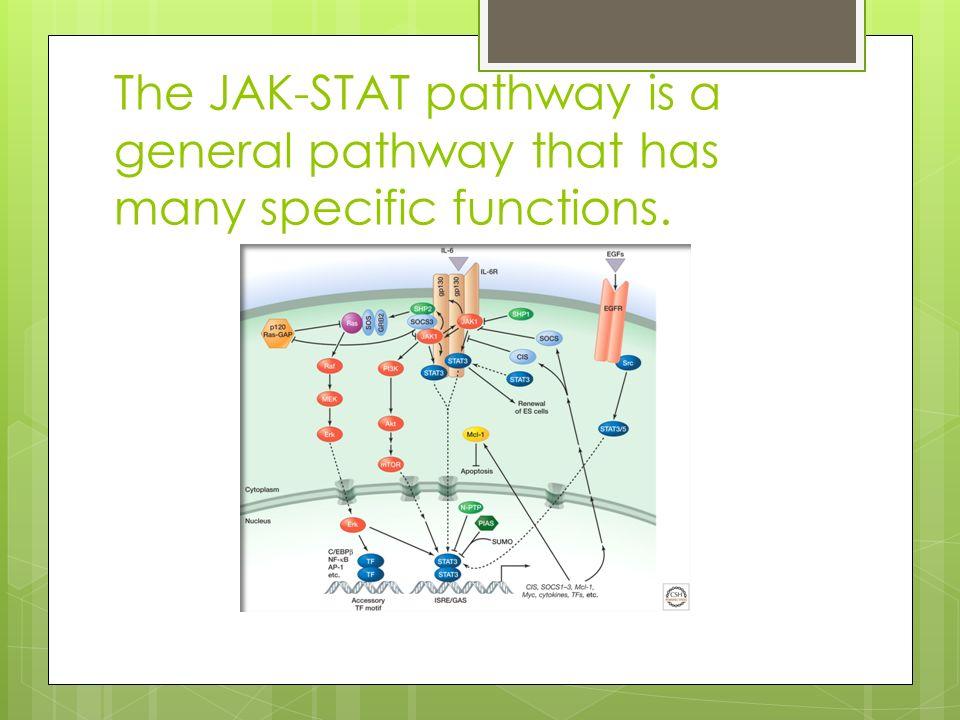 jak stat pathway