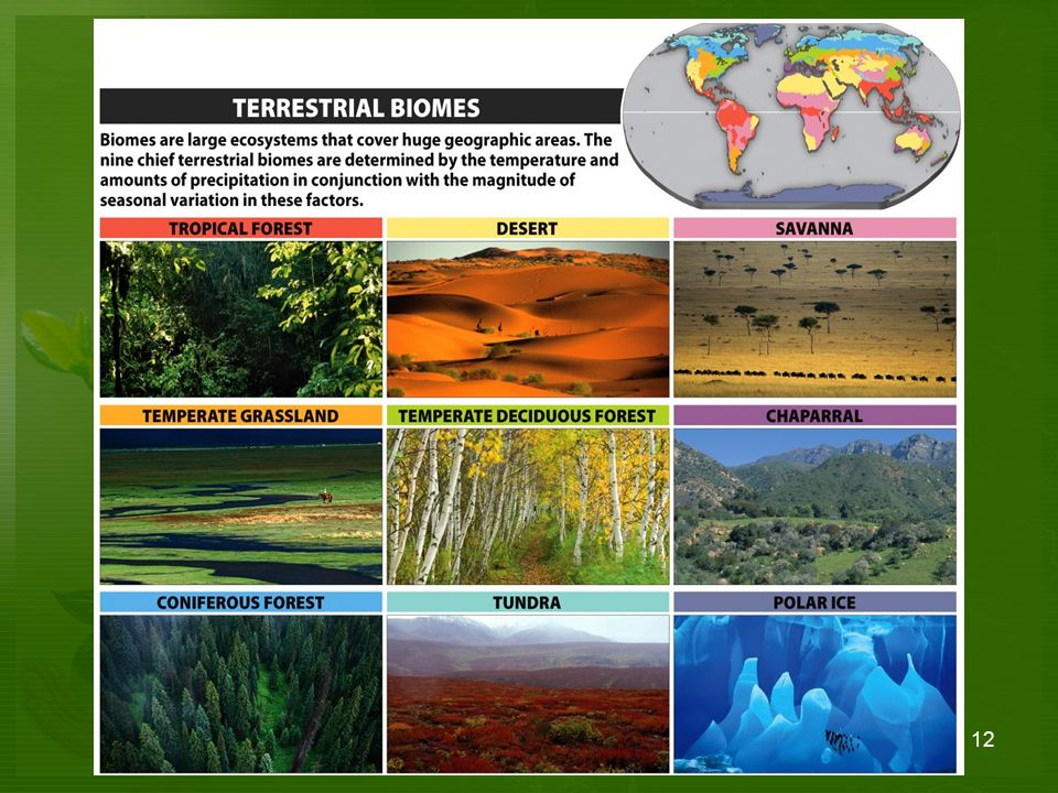 Ecosystems Communities Organisms And Their Environments Ppt