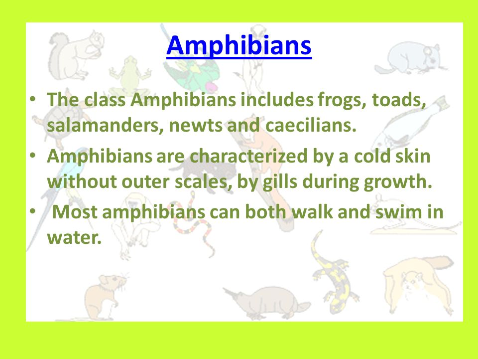 Amphibians The class Amphibians includes frogs, toads, salamanders, newts and caecilians.