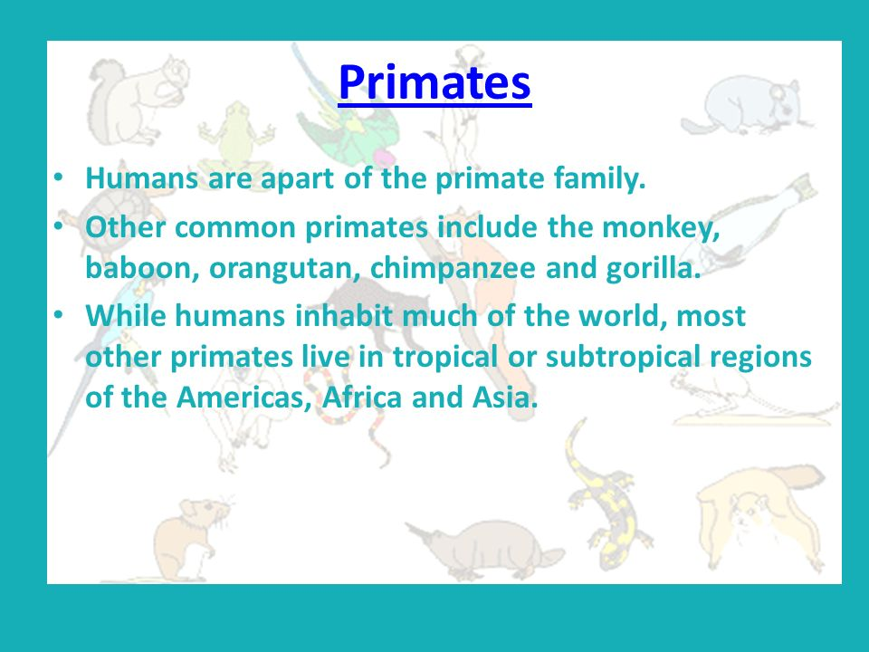 Primates Humans are apart of the primate family.