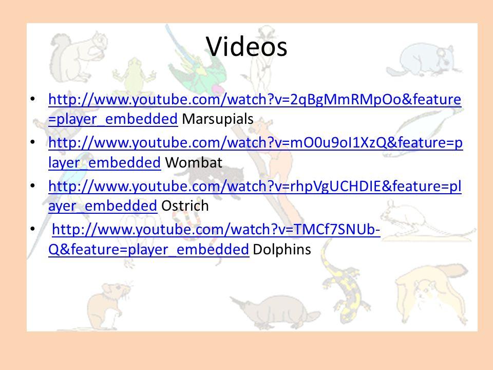 Videos http://www.youtube.com/watch v=2qBgMmRMpOo&feature=player_embedded Marsupials.