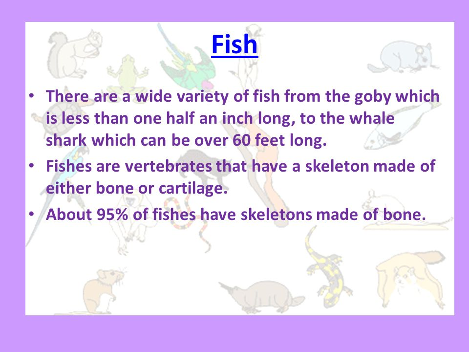 Fish There are a wide variety of fish from the goby which is less than one half an inch long, to the whale shark which can be over 60 feet long.