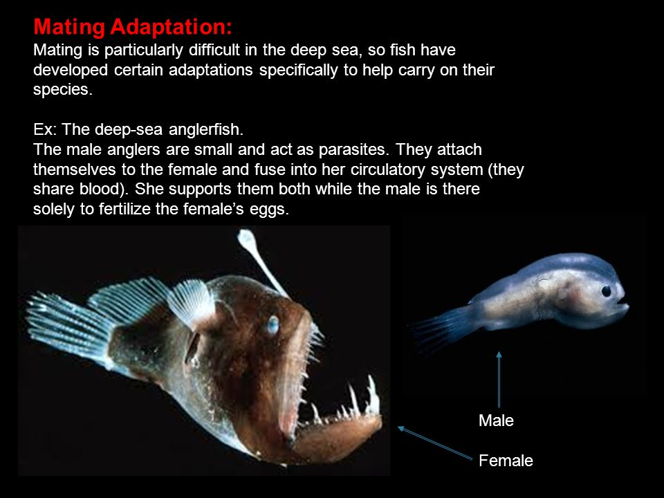 deep sea adaptations ppt video online download