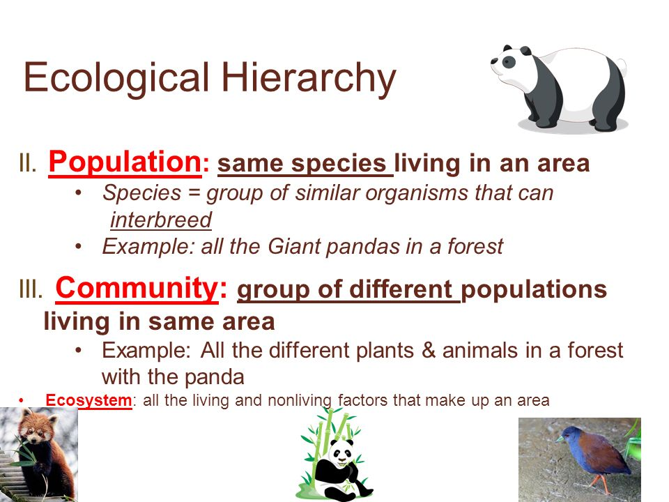 Ecological Hierarchy Individual organism Population ...