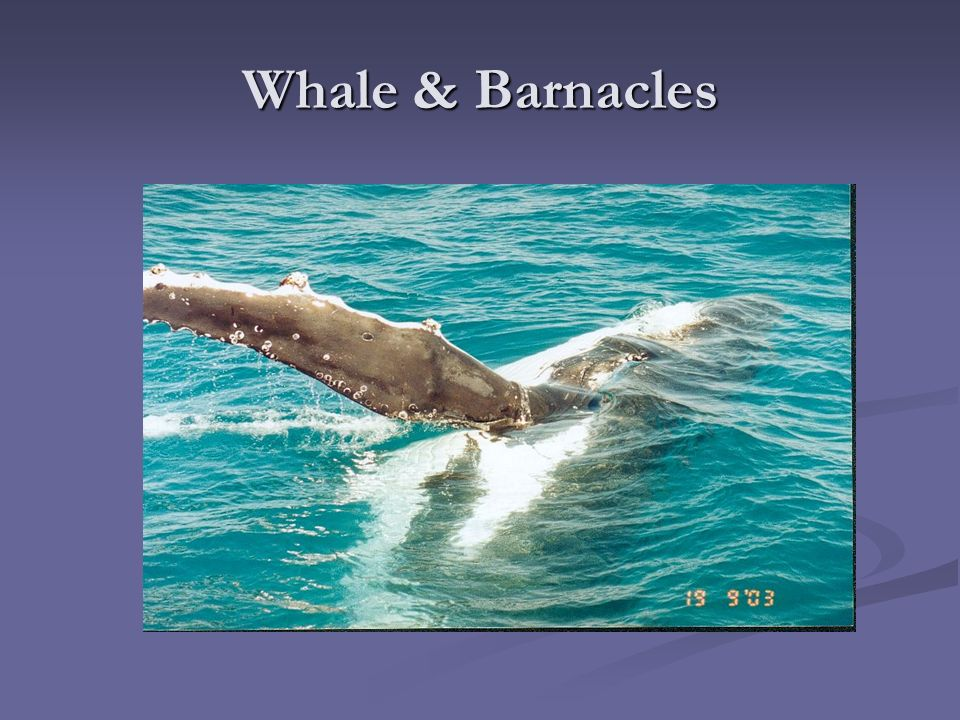 whale and barnacles relationship goals