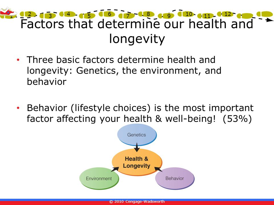 Factors that determine our health and longevity