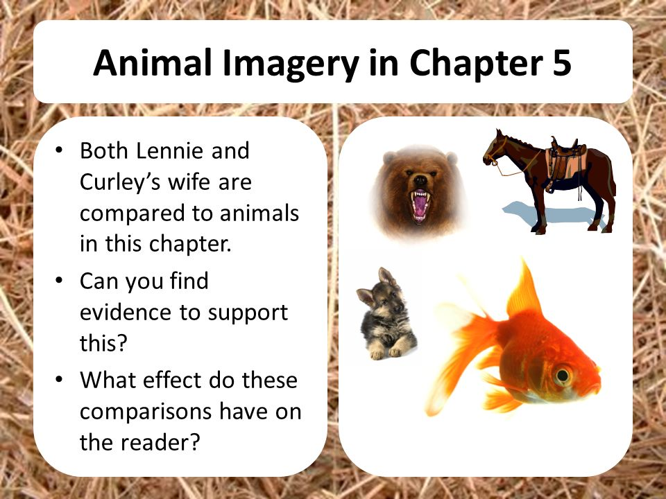 animal imagery in of mice and men Los 1to know what a stereotype is (l3) 2to understand that teenagers can be stereotyped (l4) 3to discuss why teenagers are sometimes negatively .