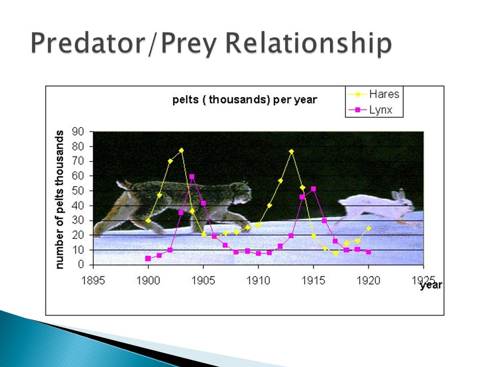 "predator prey interaction Predator-prey interactions have been among the most intensively studied areas of aquatic biology during the past several decades investigations have focused particularly on theories of ""optimal."