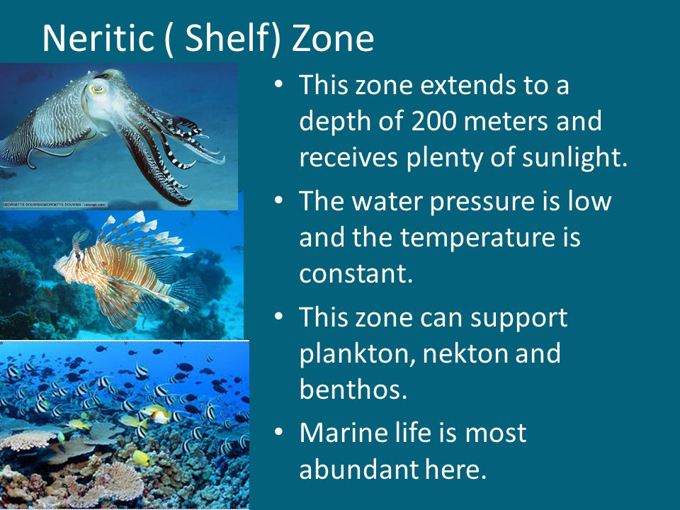 Neritic ( Shelf) Zone This zone extends to a depth of 200 meters and receives plenty of sunlight.