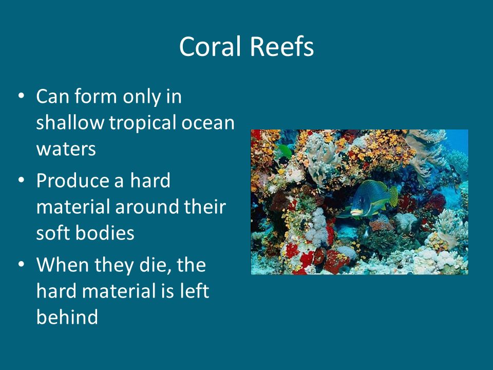Coral Reefs Can form only in shallow tropical ocean waters