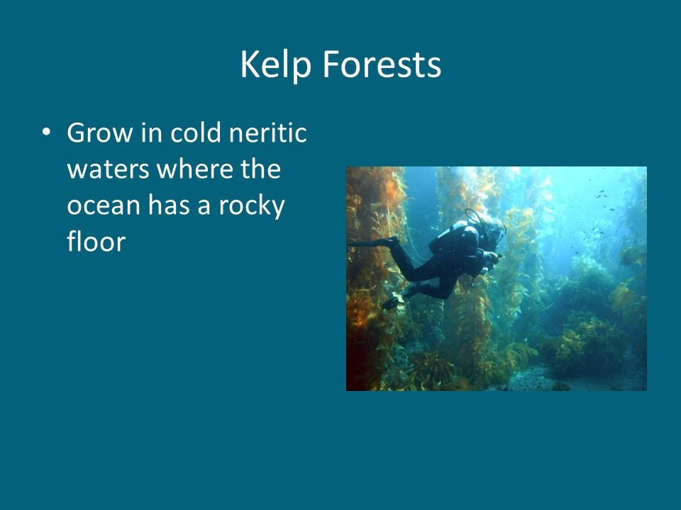 Kelp Forests Grow in cold neritic waters where the ocean has a rocky floor
