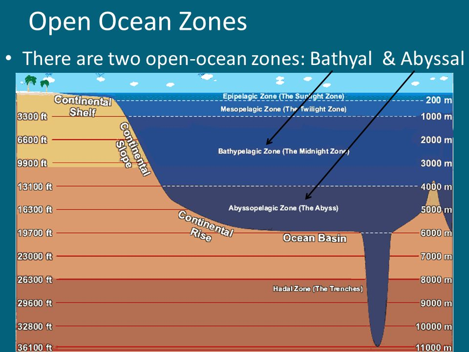 Open Ocean Zones There are two open-ocean zones: Bathyal & Abyssal