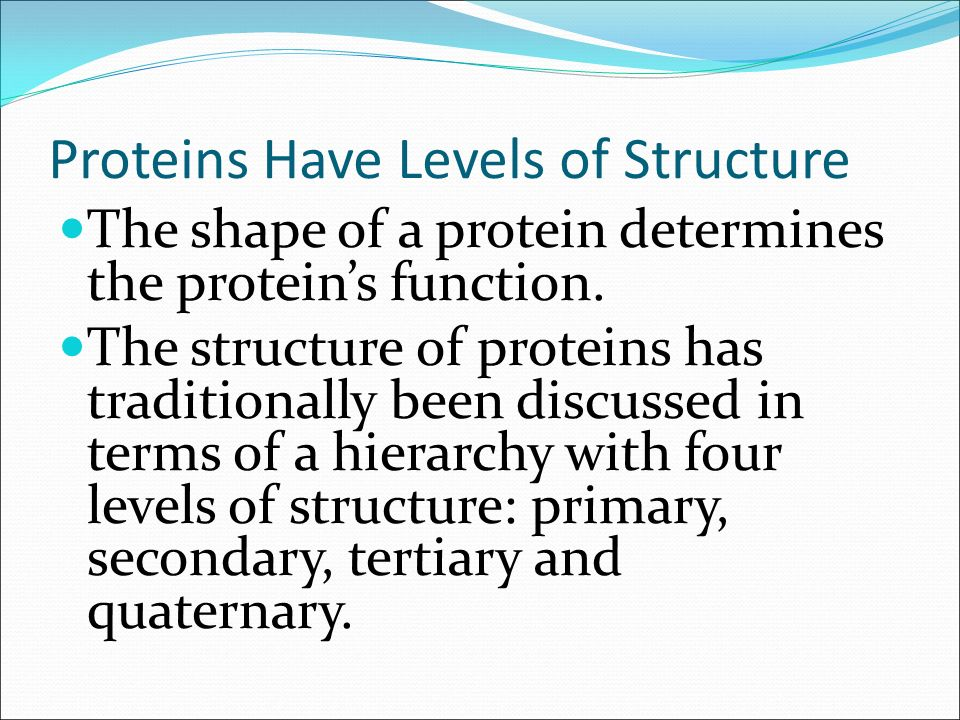 how primary structure determines protein function Primary structure of biological macromolecules determines function procaryotic structural components consist of macromolecules such as dna, rna, proteins, polysaccharides, phospholipids, or some combination thereof.
