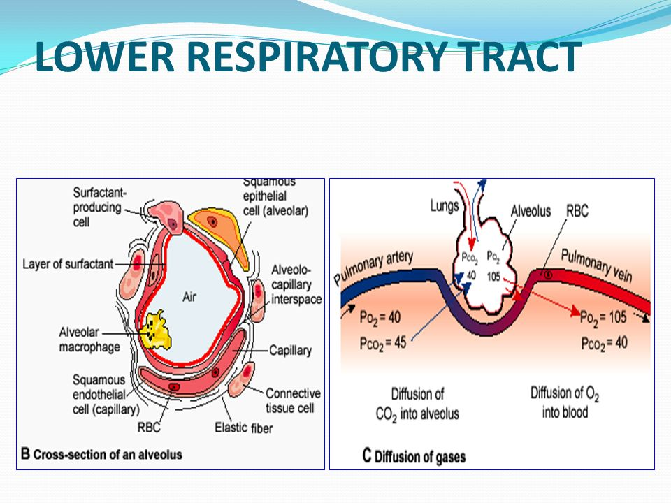 diseases of respiratory system pdf