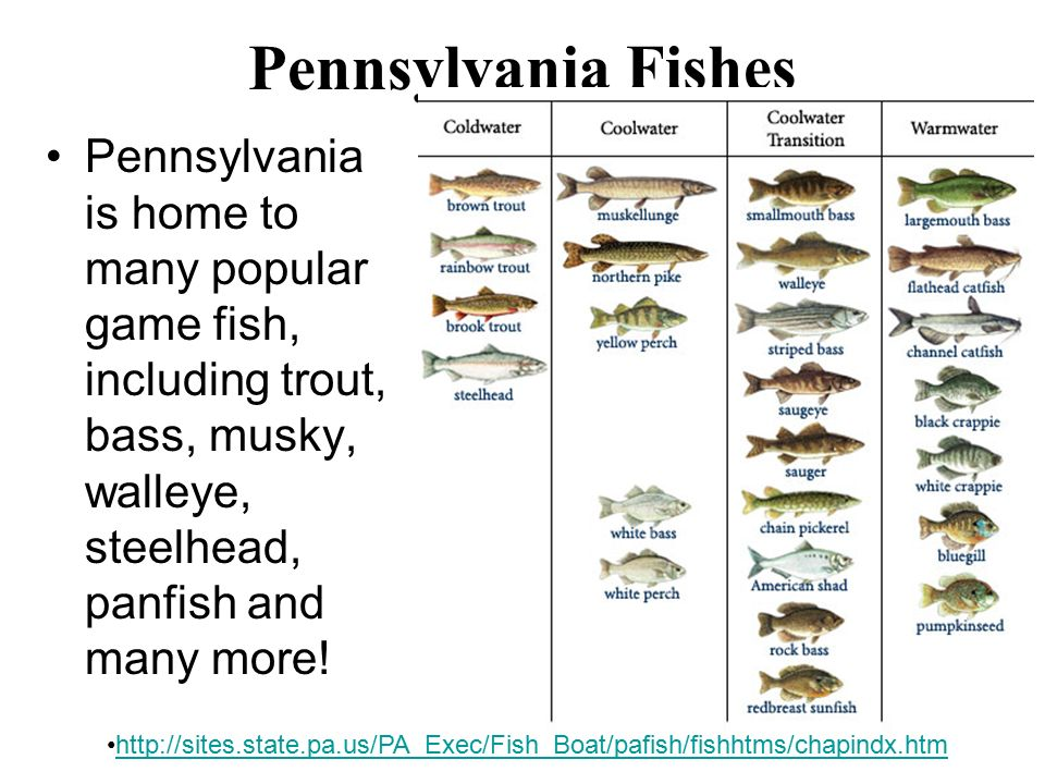 chapter 39 fish with introduction to vertebrae classes