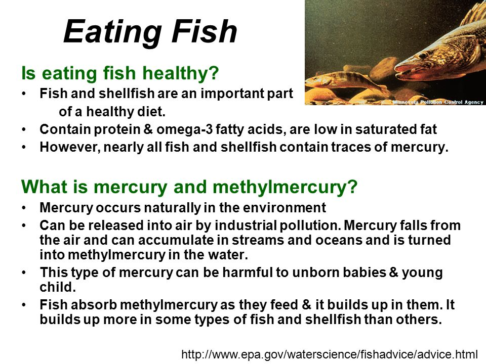 Chapter 39 fish with introduction to vertebrae classes for Do all fish have mercury