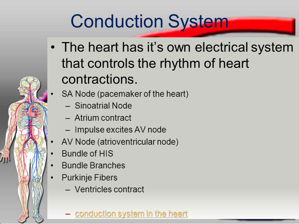 The circulatory system ppt download conduction system the heart has its own electrical system that controls the rhythm of heart contractions ccuart Choice Image