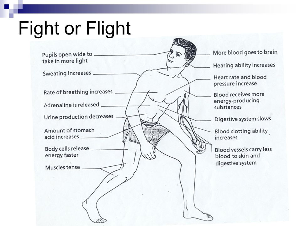 Fight Or Flight Diagram Ppt Pictures to Pin on Pinterest ...