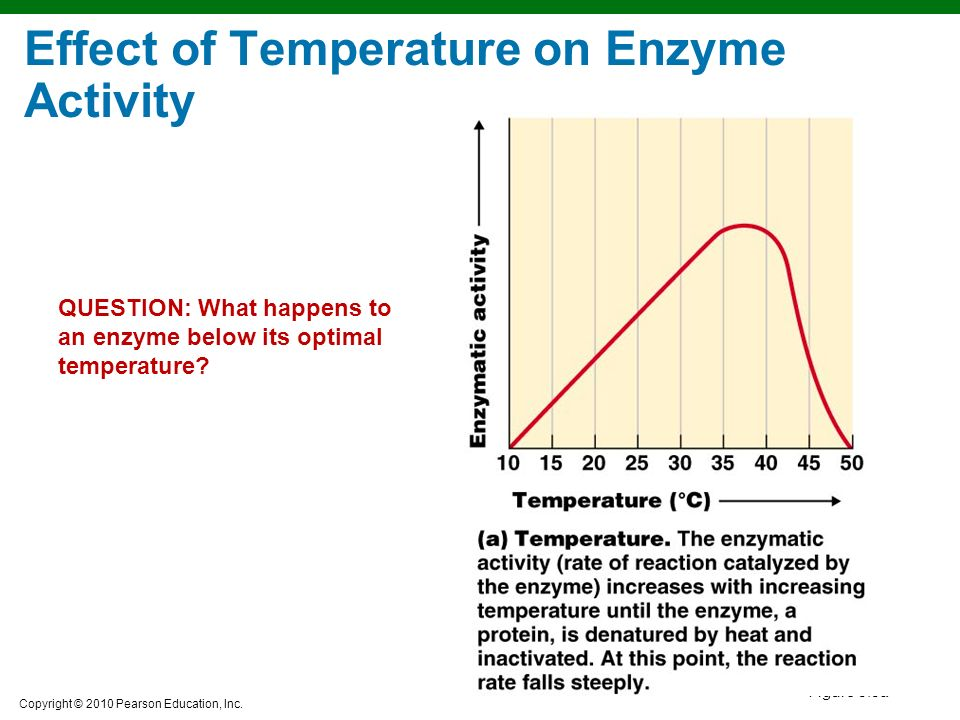 the effect of ph on enzymatic What are the factors that affect the enzymatic activity  at which an enzyme exhibits its maximum activity, is known as the optimum ph for the enzyme.