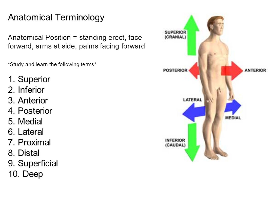 Lateral Anatomy Definition 52126 | MOVIEWEB