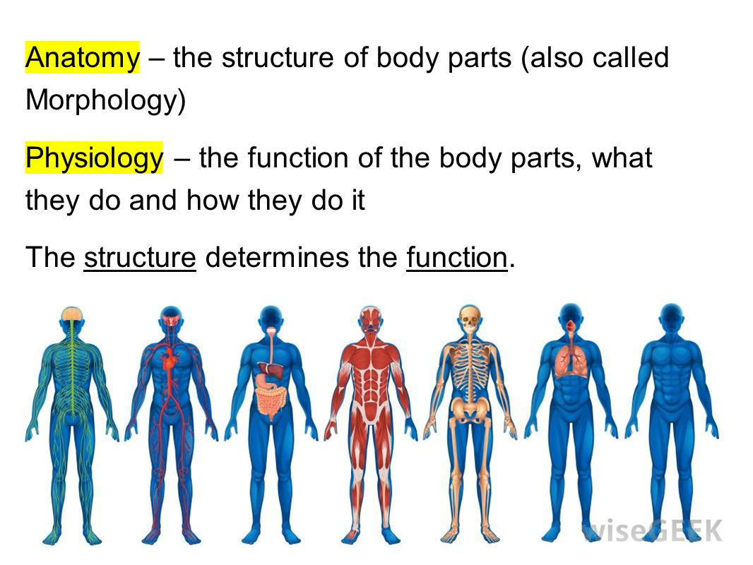 Intro morphology physiology of living things