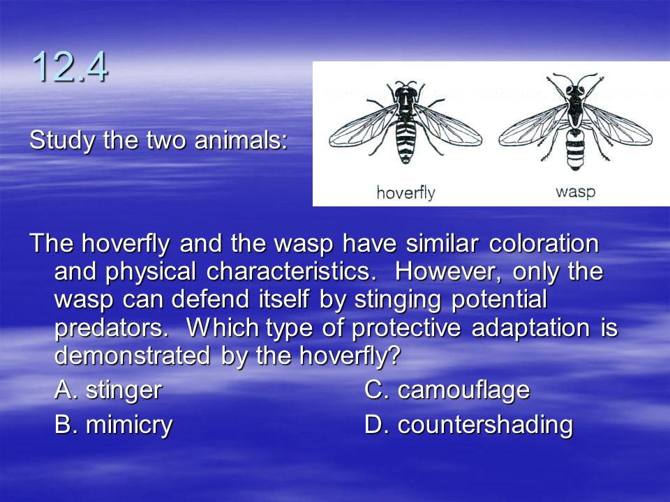 12.4 Study the two animals: