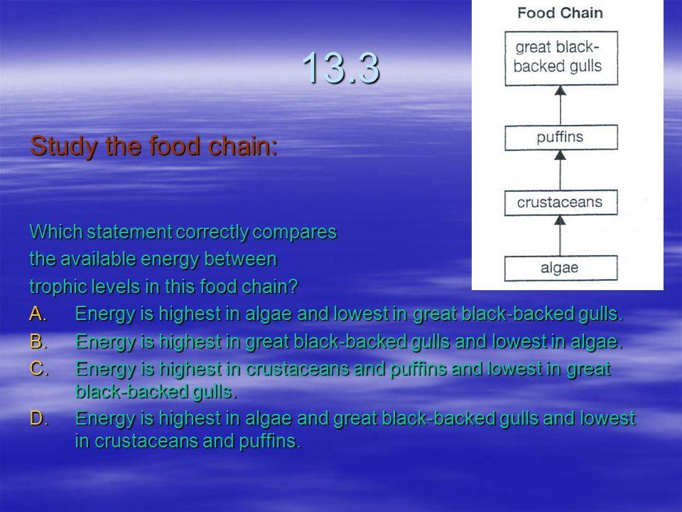 13.3 Study the food chain: Which statement correctly compares