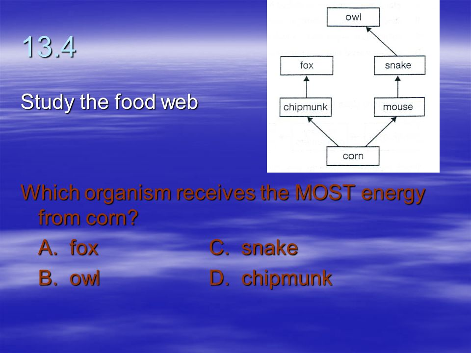 13.4 Study the food web. Which organism receives the MOST energy from corn.