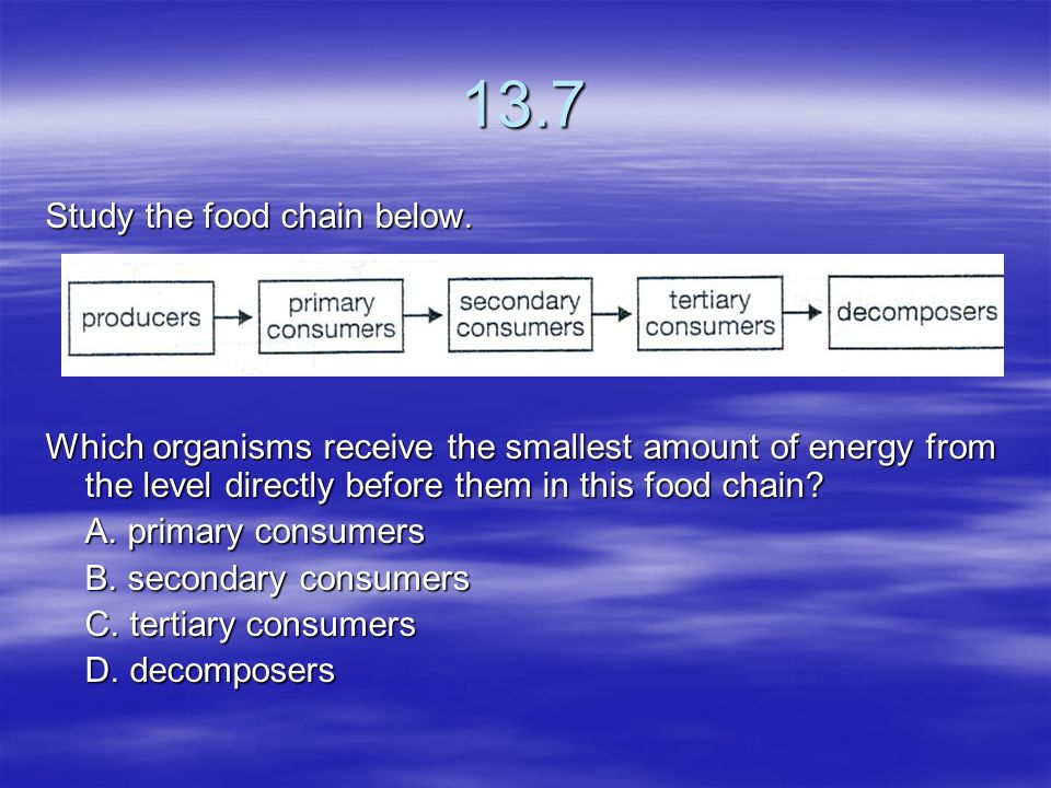 13.7 Study the food chain below.