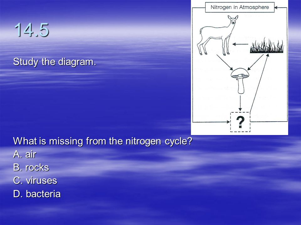 14.5 Study the diagram. What is missing from the nitrogen cycle