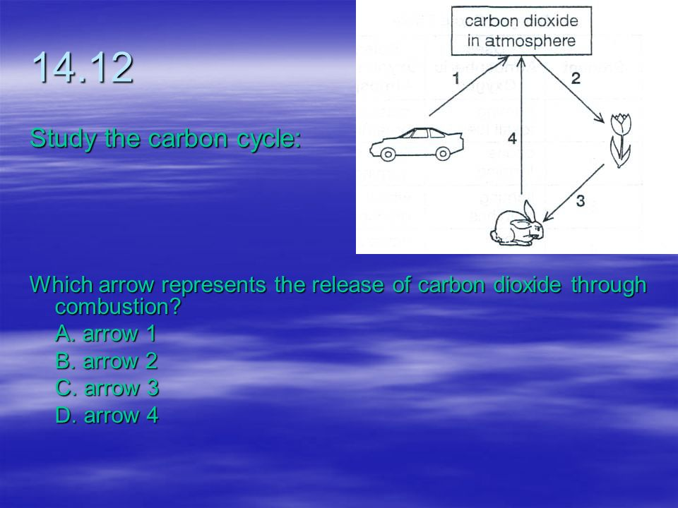 14.12 Study the carbon cycle: