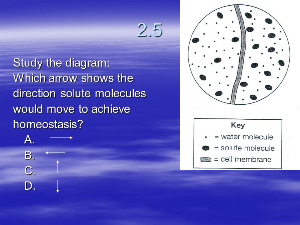 2.5 Study the diagram: Which arrow shows the