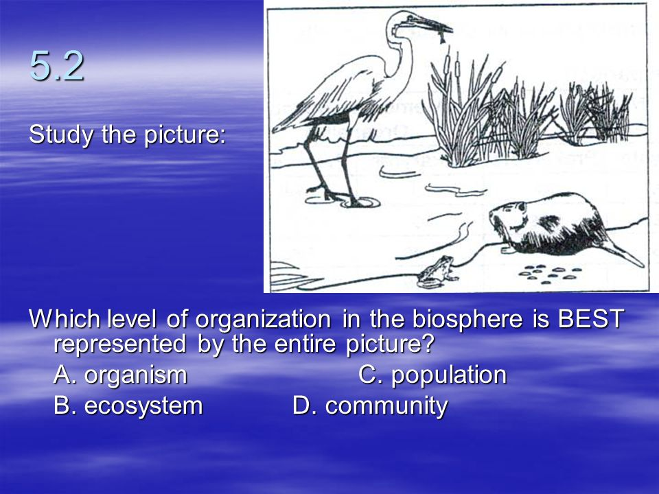 5.2 Study the picture: Which level of organization in the biosphere is BEST represented by the entire picture